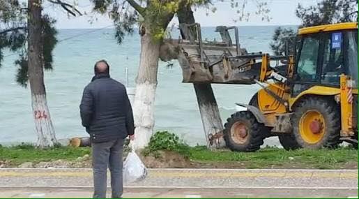 İznik'te yarım asırlık ağaçlar, 'polen yayıyor' bahanesiyle belediye ekiplerince kesildi