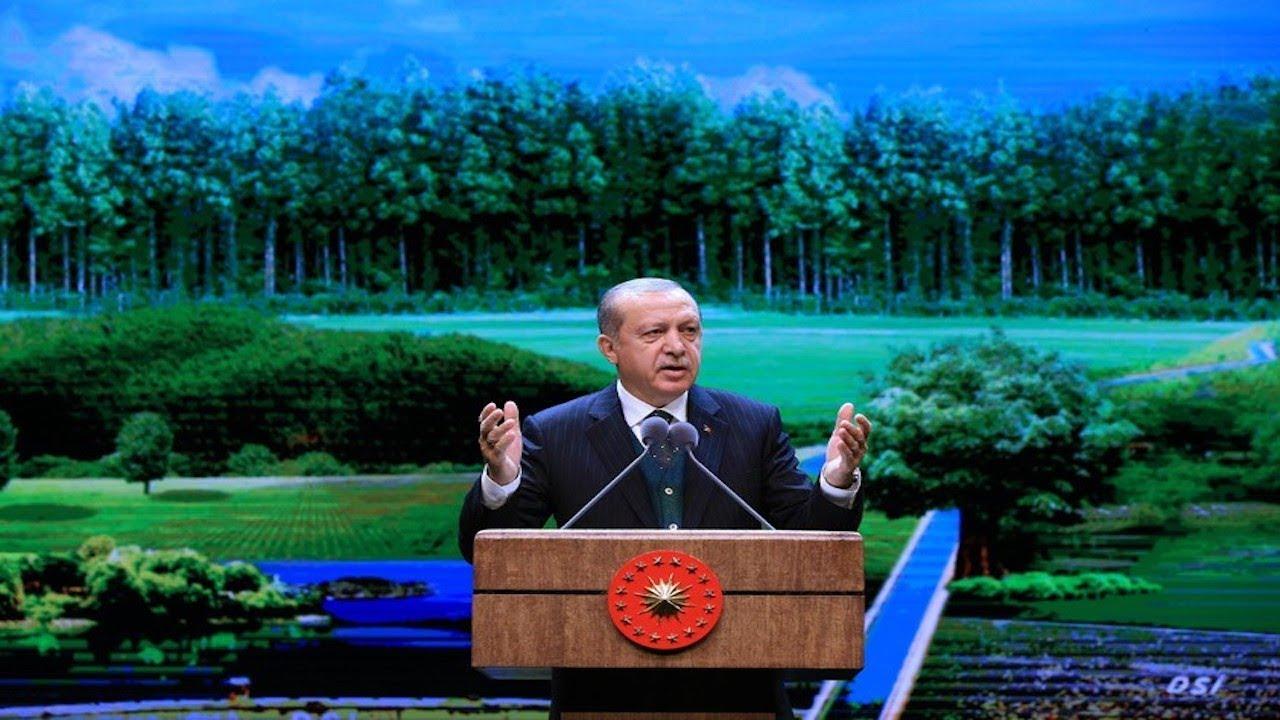 """Erdoğan'ın """"Yeşil Türkiye"""" mektubu için binlerce ağaç kesilecek"""