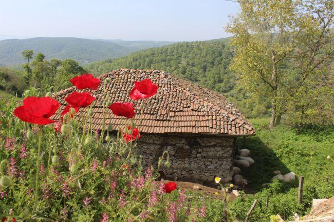 Çan'da umut belki de bir dağ köyünde gizlidir