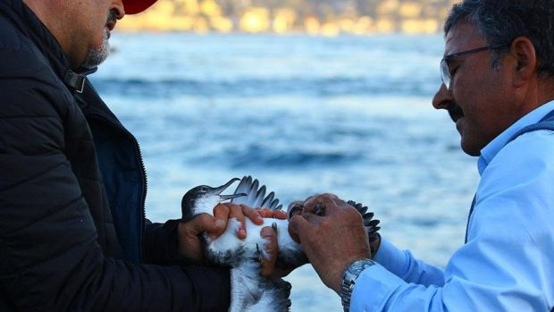İstanbul'da yelkovan kuşu katliamı yaşandı