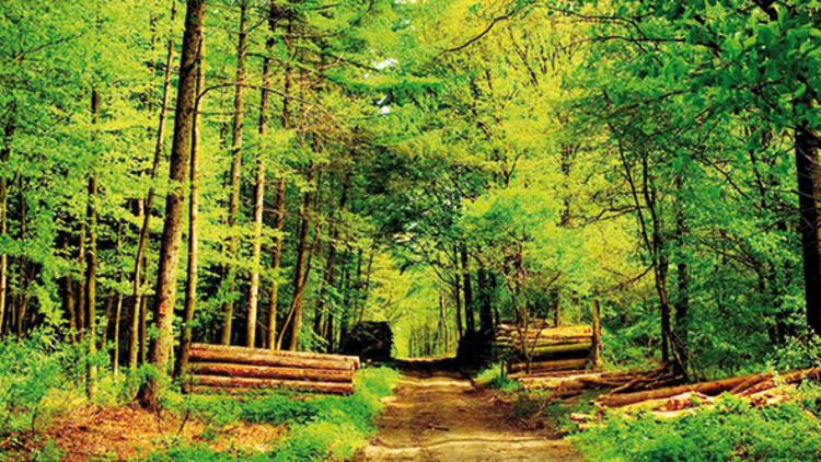 Orman Kanunu'nda değişiklikler öngören tasarı, 'ormanları ranta açacak'!