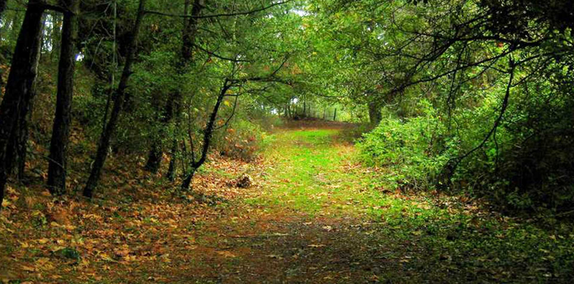 Devlet, ormanlardan yeni 2B'ler yaratmaya hazırlanıyor