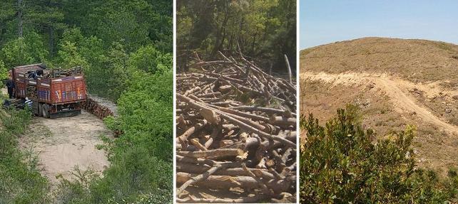 Çanakkale'de Danıştay kararlarına rağmen on bine yakın ağaç kesildi