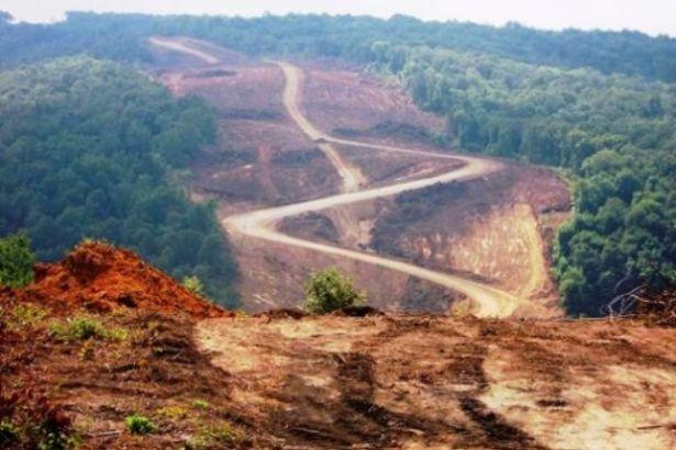 Türkiye, AKP döneminde Çanakkale büyüklüğünde ormanlık alanını kaybetti!