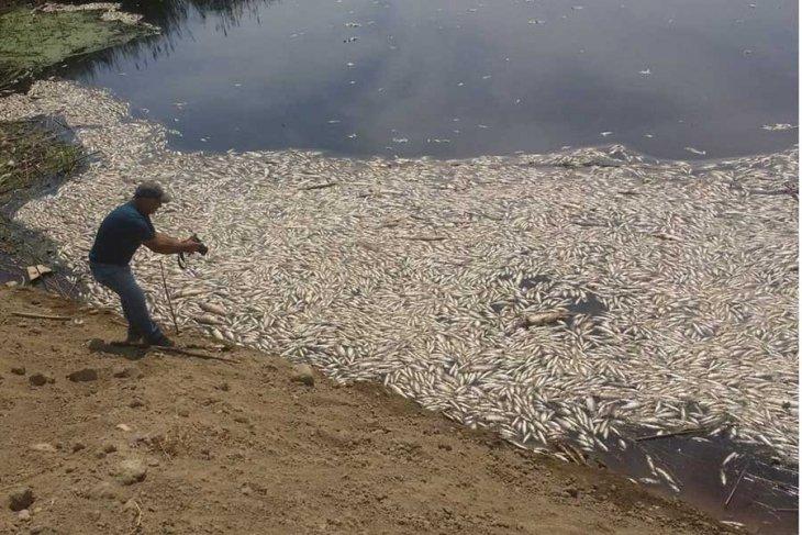 Menderes nehrindeki kirlilik binlerce balığı öldürdü