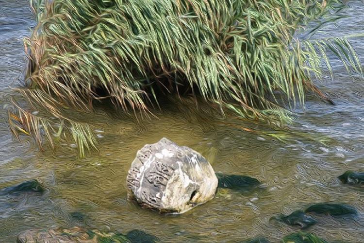 Kanal İstanbul güzergâhındaki Küçükçekmece Lagünü'nde balıklar boğularak öldü!