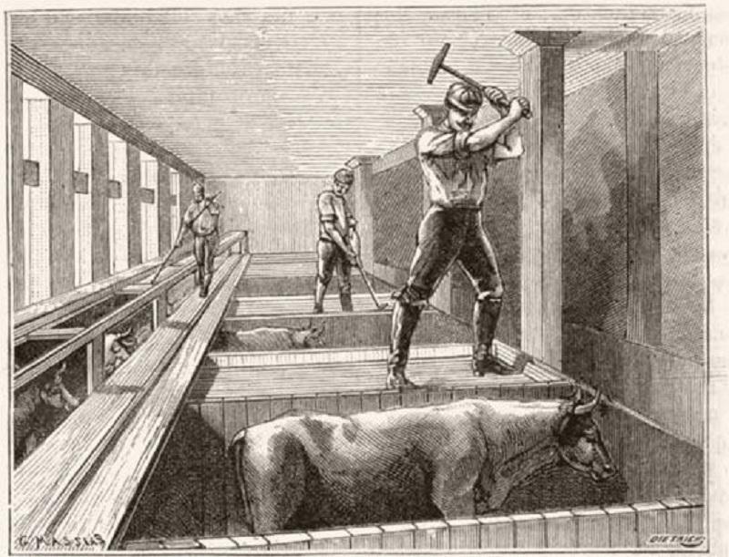 İşçi Sınıfı ve Hayvanlar: Yabancılaşmanın YalınHali