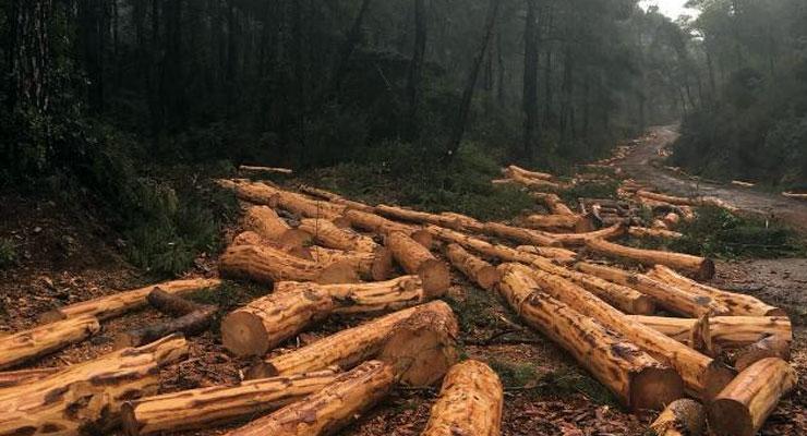 Orman katliamına devam: Yazlık sarayın yolu için de 50 bin ağaç kesildi