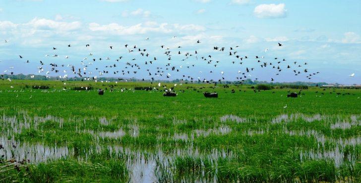 Kızılırmak Deltası Sulak Alan ve Kuş Cenneti, araç trafiğine kapatıldı