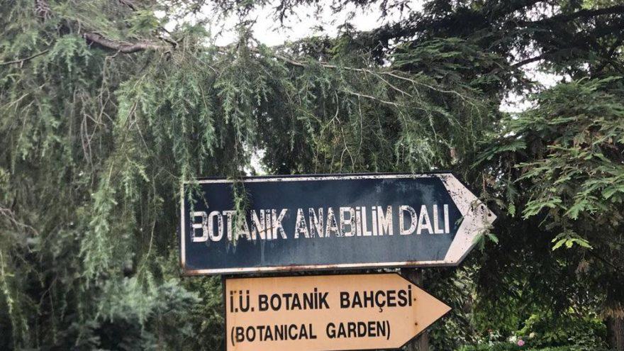 'Böylesi bir bahçe 100 yılda yapılır'