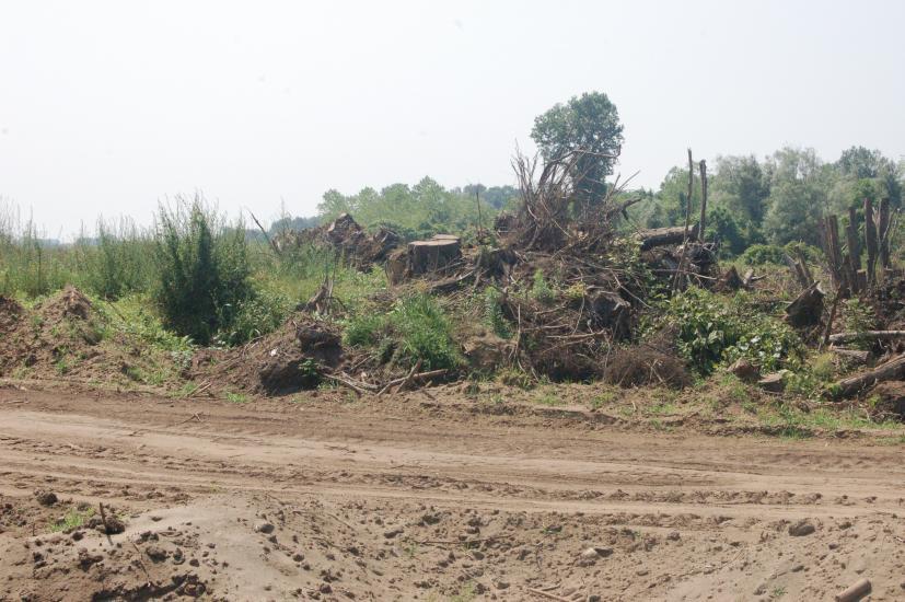 """TMMOB: """"BMC Otomotiv A.Ş. yargı kararına rağmen Acarlar Gölü ve Longoz ormanını tahrip ediyor"""""""