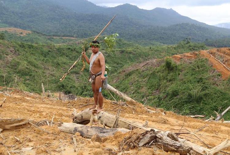 Malezya'da yıkıma karşı direnen yerlilerin mücadelesi: 'Topraklar çoraksa yaşam kalmamıştır'