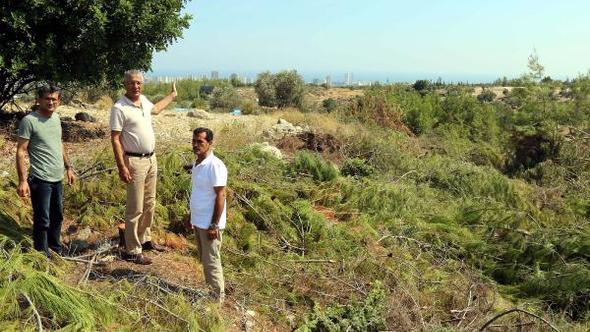 Mersin'de Hazine arazisindeki 300 ağaç kesildi