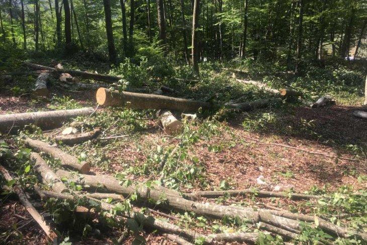 Mahkeme, Istranca Dağları'nda Balaban köyündeki ağaç katliamına 'dur' dedi!