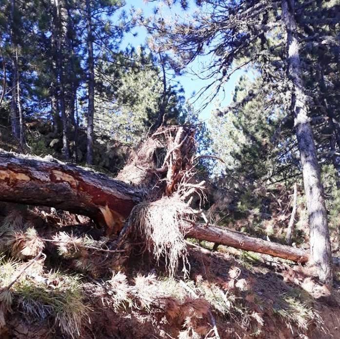 Isparta Tota Ormanları'nda ağaç katliamı
