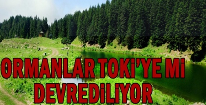 Türkiye Ormancılar Derneği: Ormanlar TOKİ'ye mi devrediliyor?