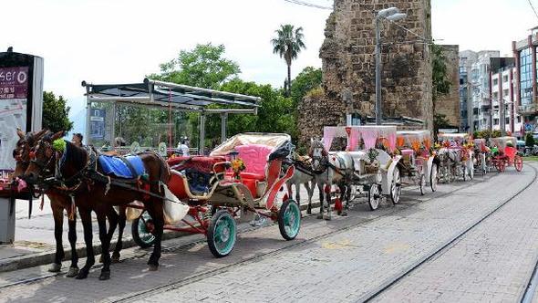 Antalya'da atlar özgürleşecek