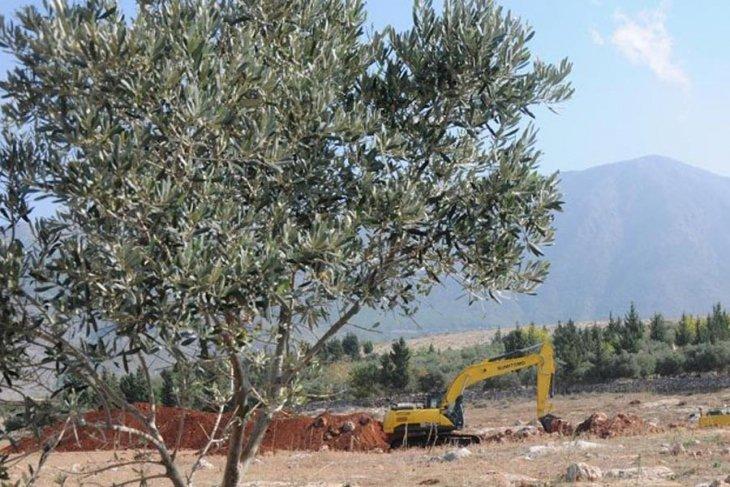Soma'da çimento ocakları için 50 bin ağaç kesilecek