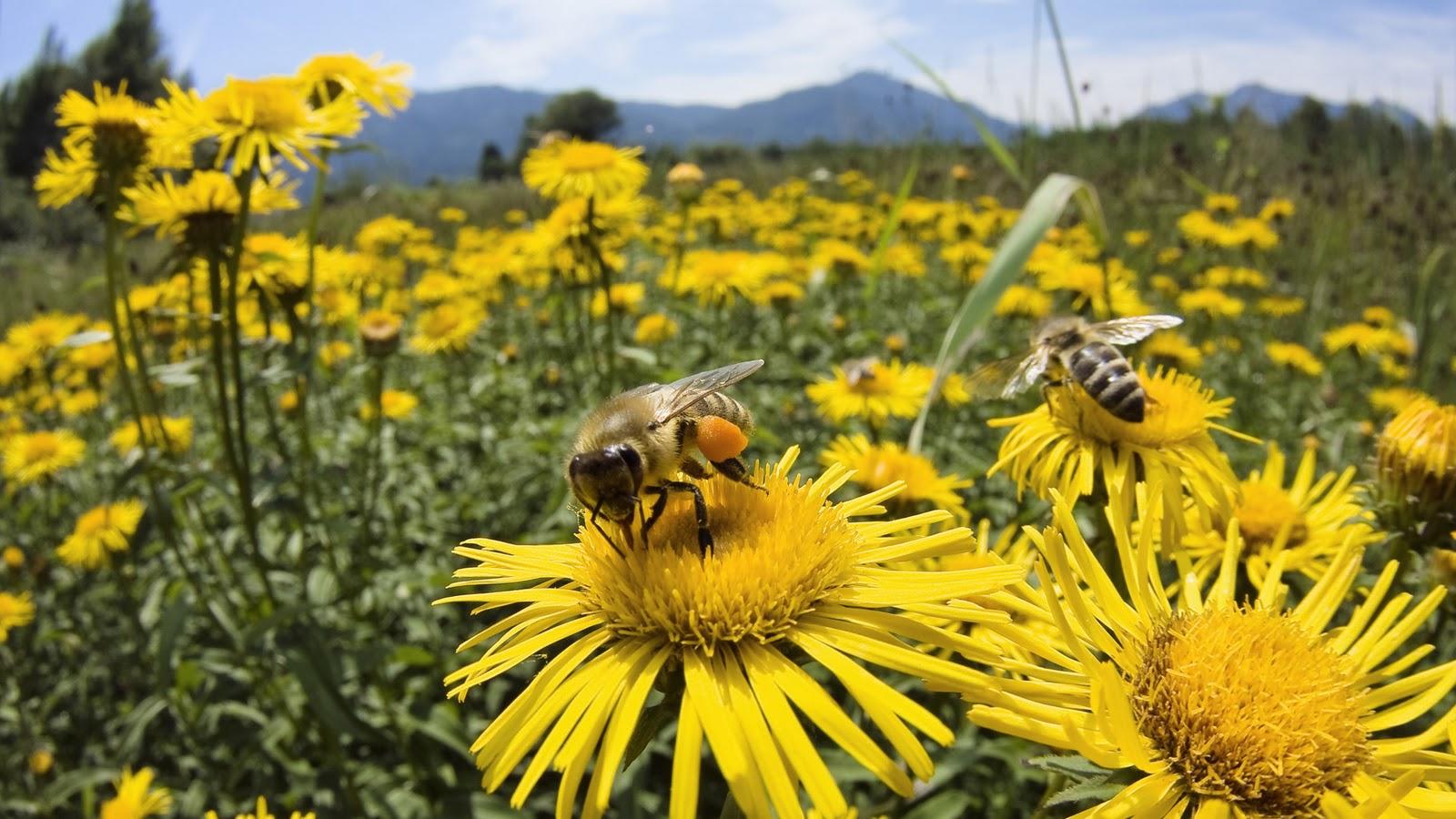 Yaşamak istiyorsan arıları yaşat