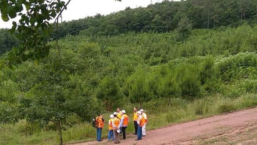 Çöp tesisi için Kocaeli Kuzey Ormanları'nda 11 bin 804 ağaç kesilecek!