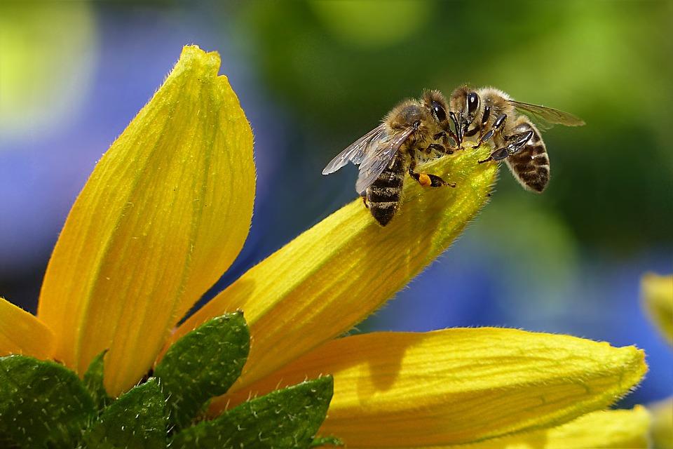 Arılar nefes aldı: Çevre örgütlerinin mücadelesi neonikotinoidleri yasaklattı!