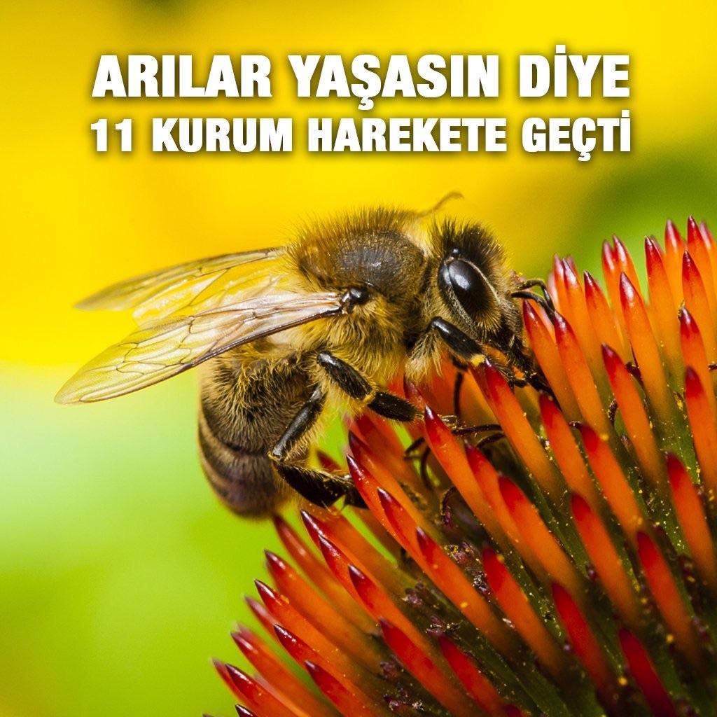 Arılar yaşasın diye 11 kurum harekete geçti