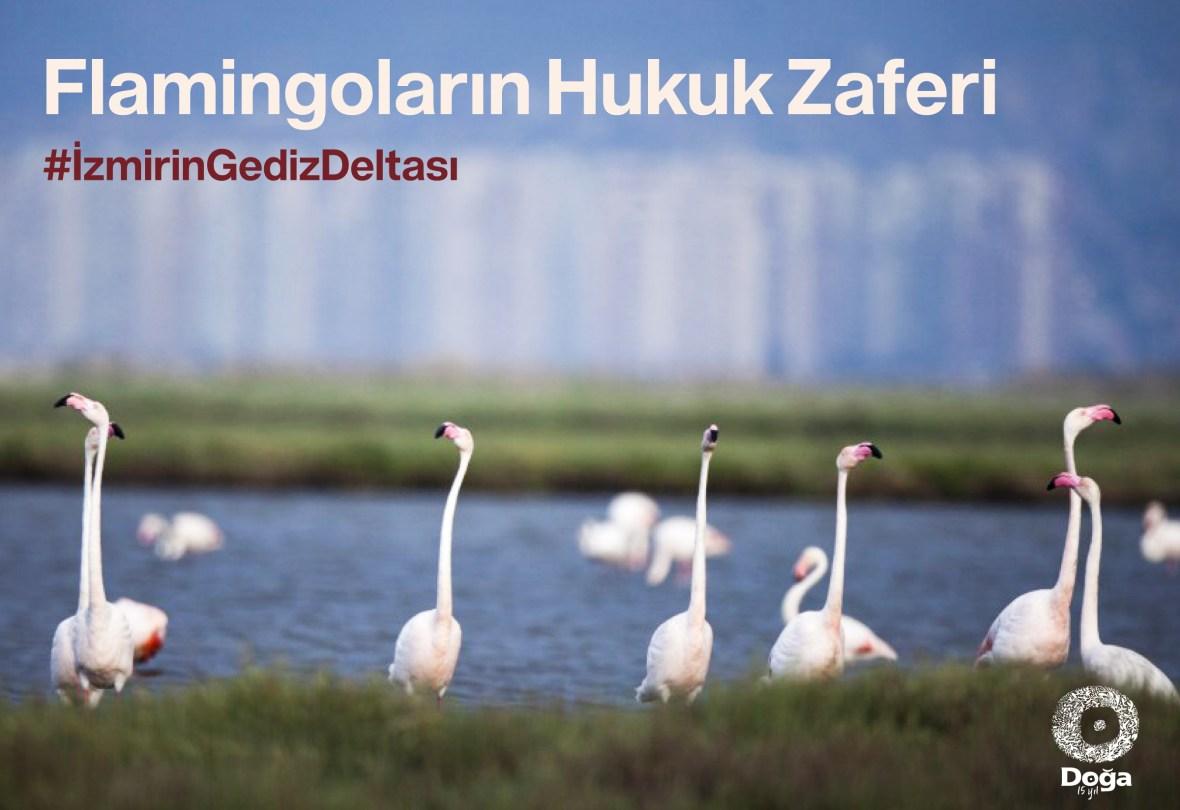 Flamingolar ve İzmir için nihai karar: İzmir Körfez Geçişi Projesi iptal edildi