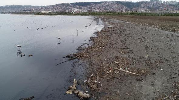 İzmit Körfezi'ndeki göçmen kuş türü sayısı, kirlilikten dolayı 169'dan 7'ye indi