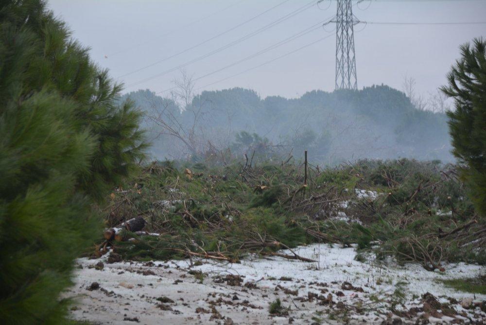 Bandırma'da yurt yapmak için Onyedi Eylül Üniversitesi ormanını katlettiler