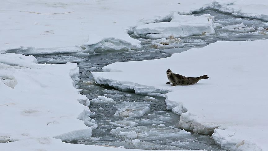 Küresel ısınma katlanarak artıyor