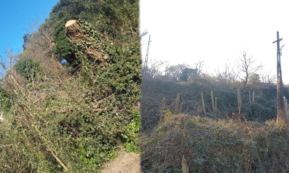 Villadakilere deniz manzarası açmak için ağaçları kestiler
