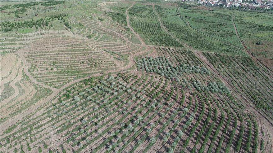 Atatürk Orman Çiftliği yağması tam gaz: 1 milyon metrekaresini daha imara açtılar