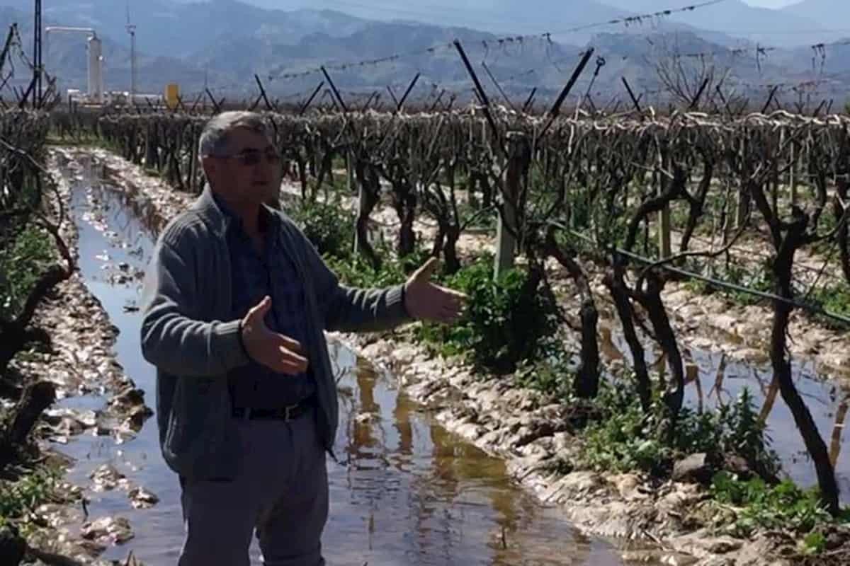 Bu topraklar bu kadar değersiz mi: Manisa, Alaşehir'de jeotermal kuyusu patladı, üzüm bağları sıcak su altında kaldı