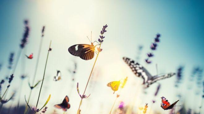 Ekosistemin temel direklerinden biri yıkılmak üzere: Böcekler insan yüzünden hızla yok oluyor.