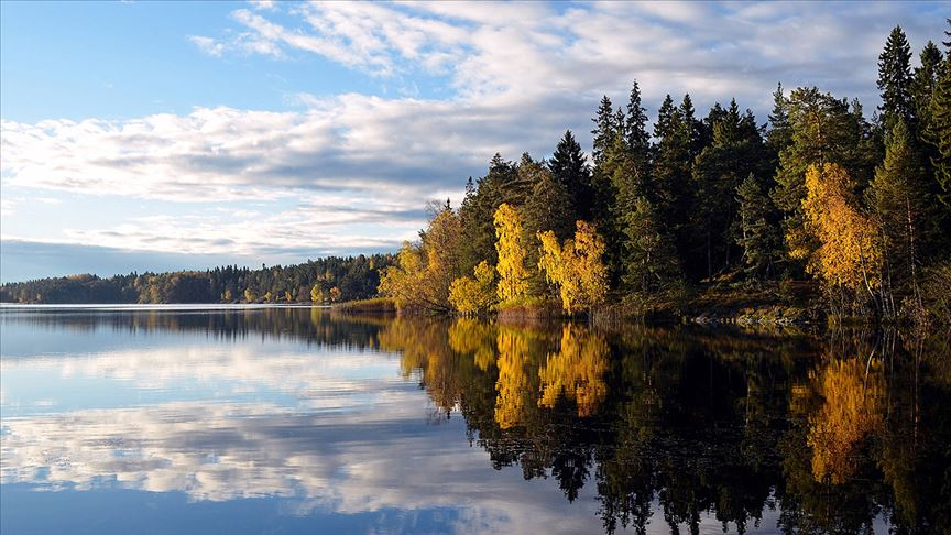Avrupa Birliği'nin yüzde 43'ü ormanlık alanlardan oluşuyor