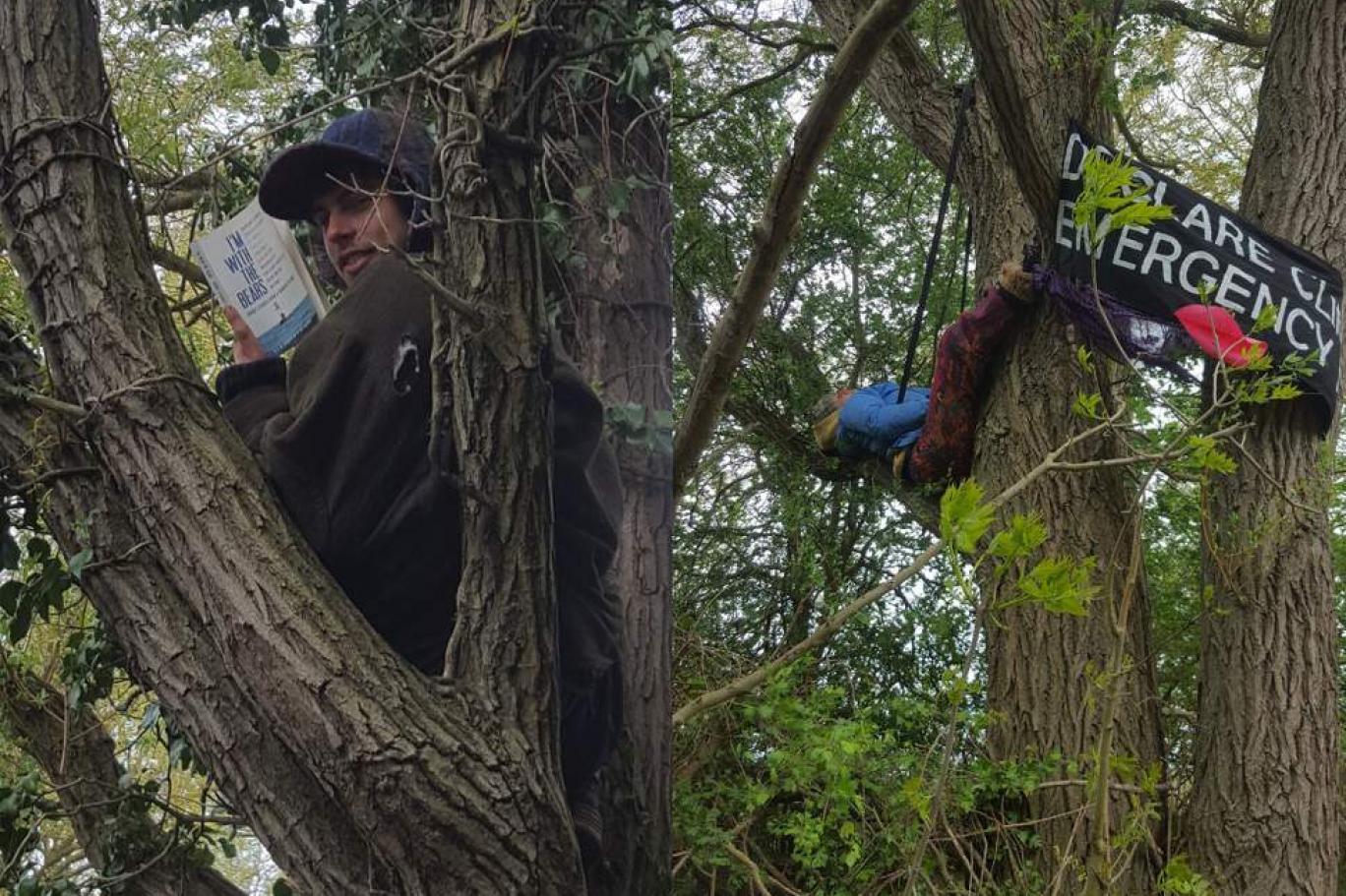 Yokoluş İsyanı aktivistleri, ağaç kesimini engellemek için ağaçlara kamp kurdu