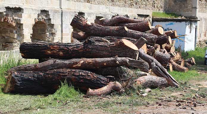 Çanakkale'de ağaç katliamı