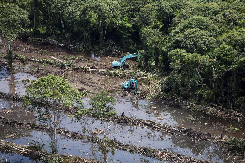Dünyada 2018'de 12 milyon hektar ormanlık alan yok edildi