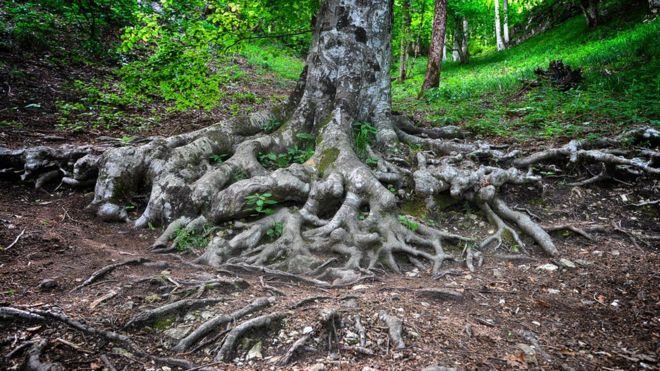 Her ormanın altında ağaçları ve bitkileri birbirine bağlayan  bir ağ olduğu tespit edildi