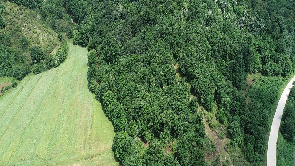 Kuzey Ormanları katili otobanın taş ocağı da ormana