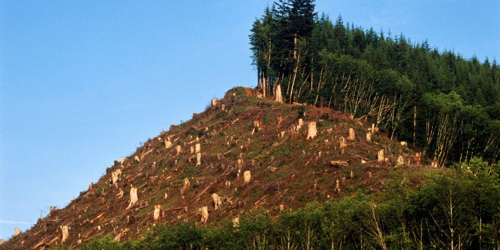 Orman tahribinin yol açtığı toprak erezyonu iklim değişikliğini tetikliyor