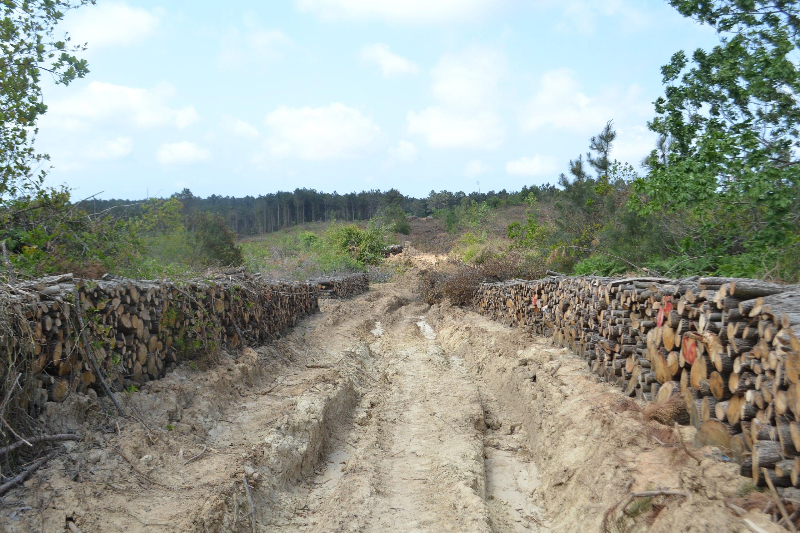 2.5 milyon dediler, 13 milyon ağaç kestiler!