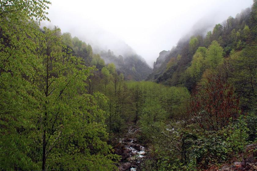 EGEÇEP ve ÇMO İzmir Şubesi: Ormanlar 5 yıldızlı otellere sunulamaz