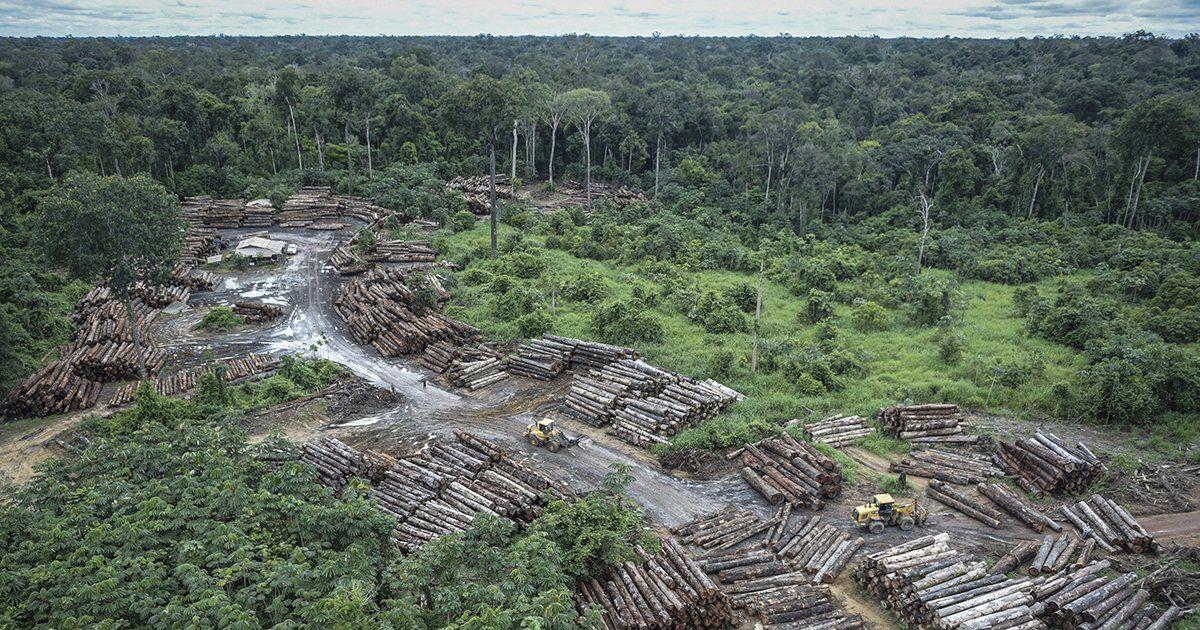 Amazon ormanları ve yerli halkı tarihin en ağır saldırısı altında