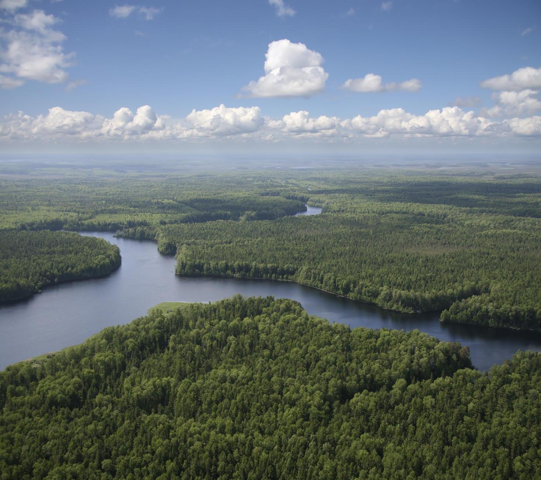 İklime acil çözüm: Yeni ormanlar