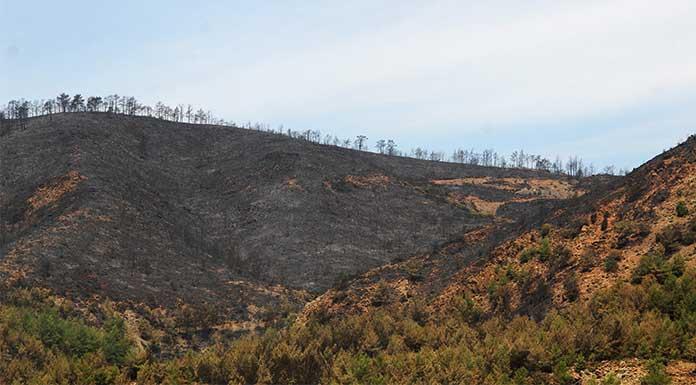Türkiye Ormancılar Derneği Batı Akdeniz Şubesi Başkanı: 'Orman Bakanlığı'nın notu sıfır'