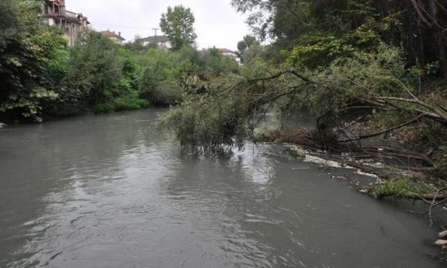Bartın'da ırmağın suyu siyaha büründü, balık ölümleri başladı