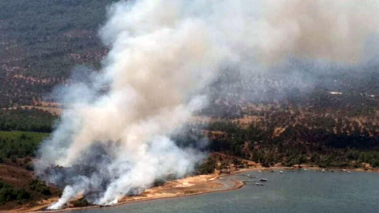 Tasarlanmış seri cinayetler orman yangınları