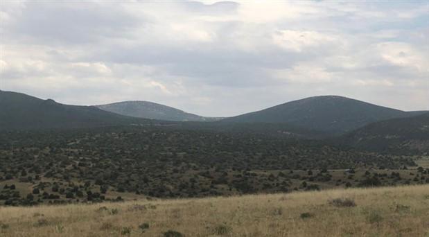 Eskişehir'de 31 bin hektarlık alanda yüz binlerce ağaç katledilecek