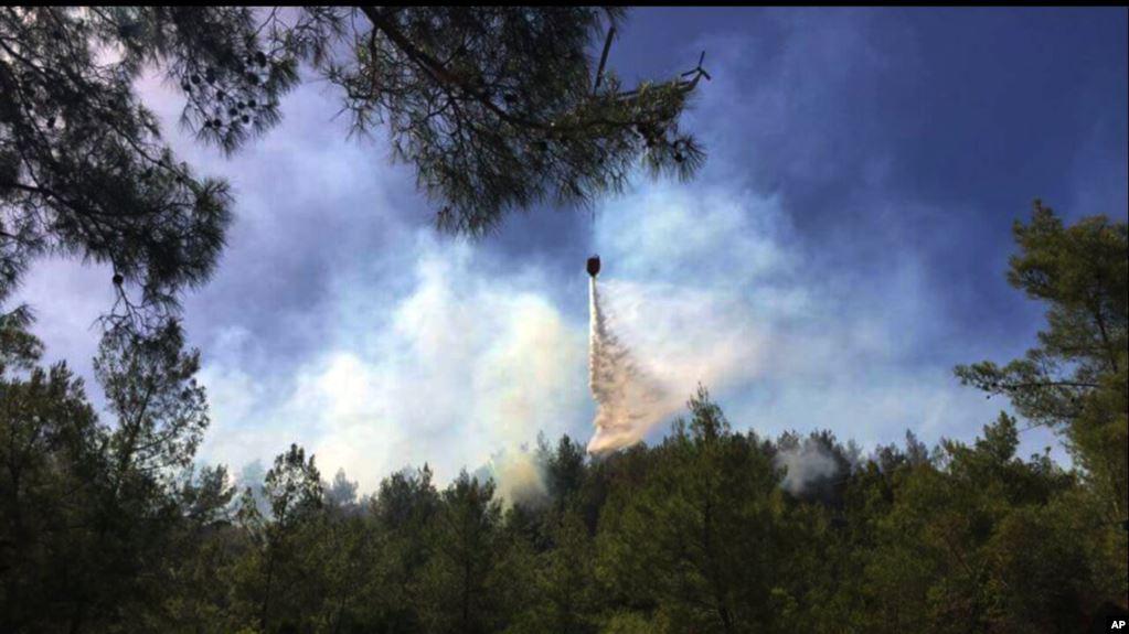 Ormanlar İçin Asıl Tehlike Yangınlar mı Yoksa Maden Ruhsatları ve HES'ler mi?